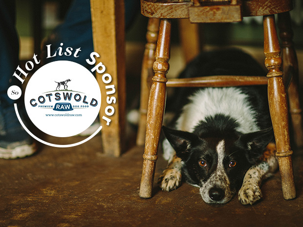 Top 20 Dog Friendly Pubs in the Cotswolds The Fox Inn Broadwell